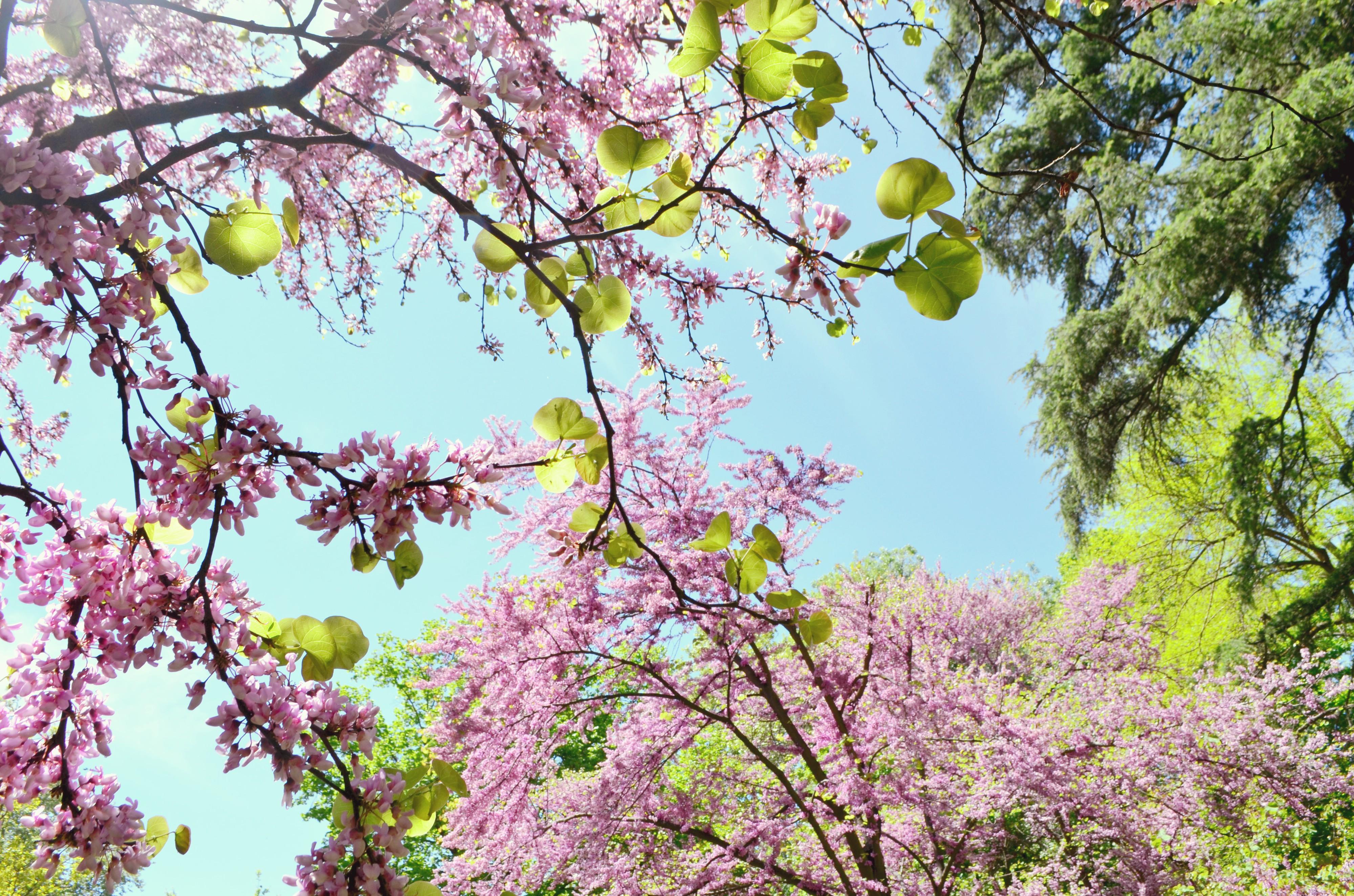Parque-el-capricho-Madrid-ChicAdicta-influencer-Chic-Adicta-blog-de-moda-spring-spain-flores-rosa-PiensaenChic-Piensa-en-Chic