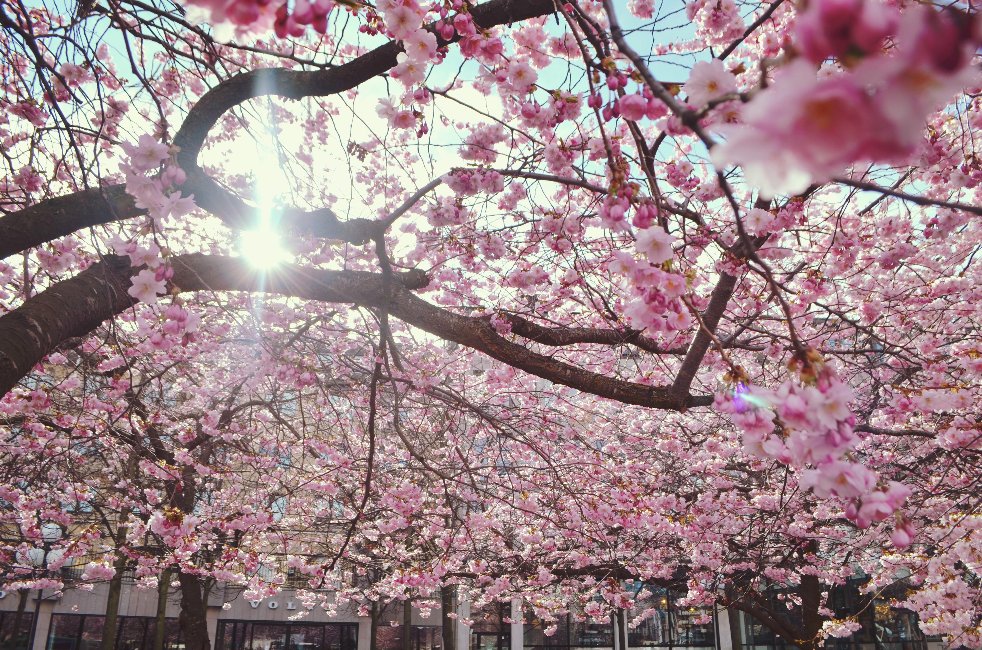 Primavera-en-estocolmo-ChicAdicta-que-ver-en-suecia-Chic-Adicta-fashionista-fashion-travel-PiensaenChic-Piensa-en-Chic